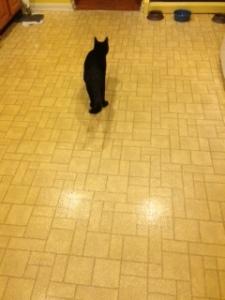 cat in kitchen