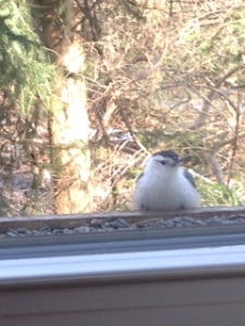 bird in window